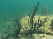 Девушки ласкают киски под водой